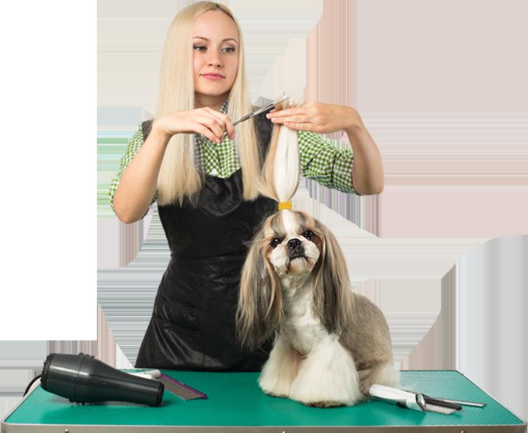 //fivestardog.pl/wp-content/uploads/2020/01/mission.png